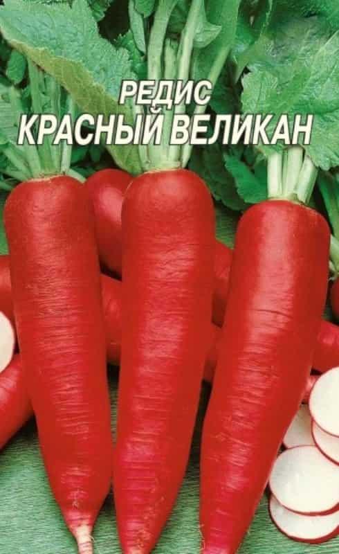 редис красный великан отзывы фото