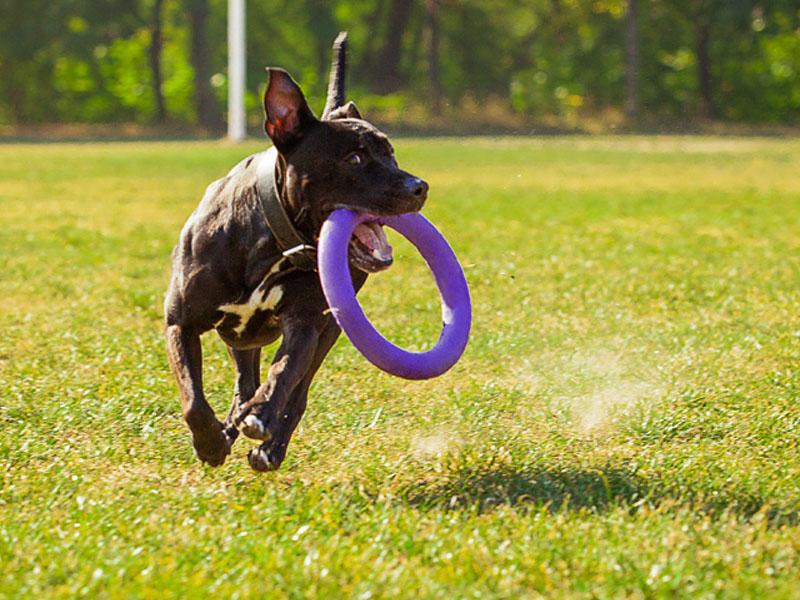 Тренировка собак картинки