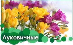 Луковичные заказать в Украине на весну