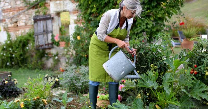 Правила роботи на городі