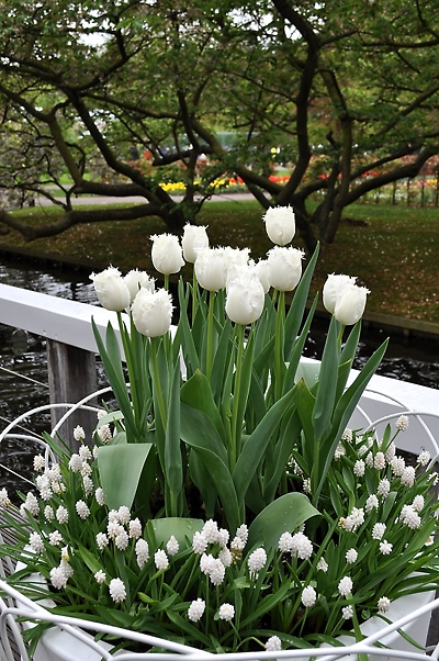 Купити цибулини квітів в Україні