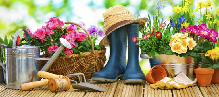 Літня посадка рослин
