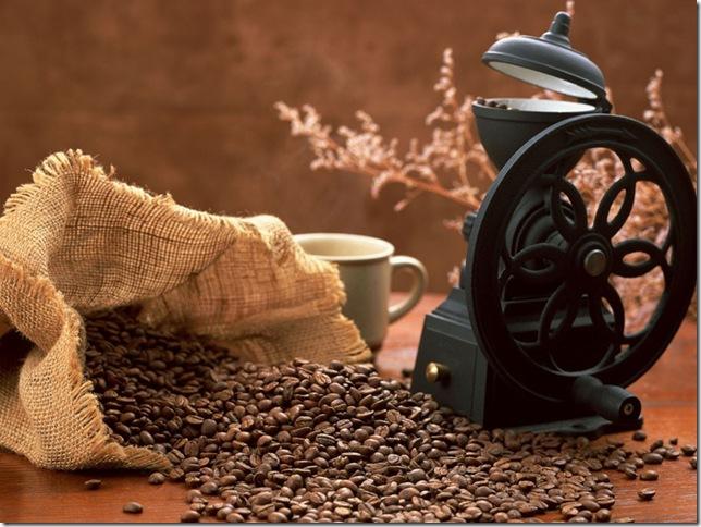 Придбати кавове дерево
