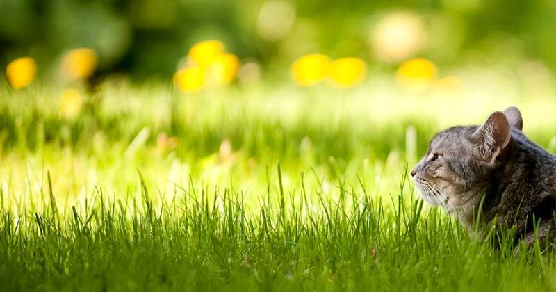 Оздоровити газон