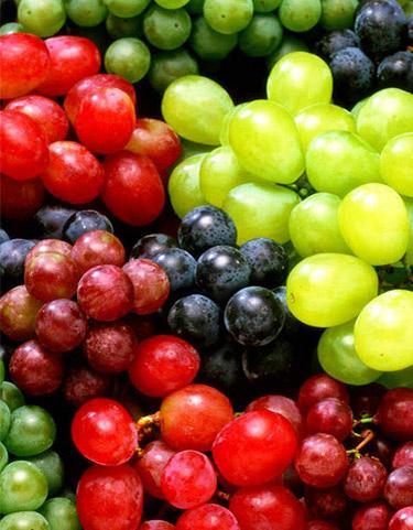 Терміни дозрівання винограду