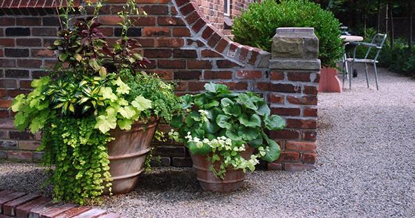 вуличні рослини в горщиках