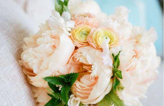Саженцы кремовых роз
