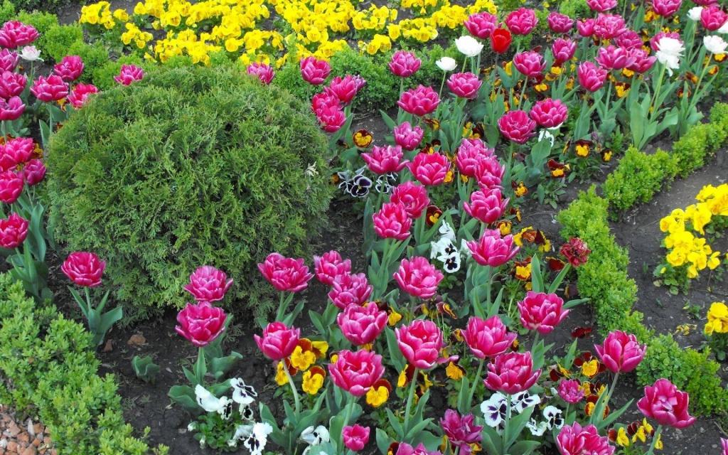 Цибулинні квіти купити