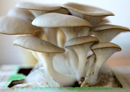 Мицелий грибов в Украине