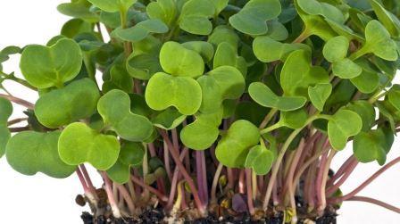 Насіння мікрозелені