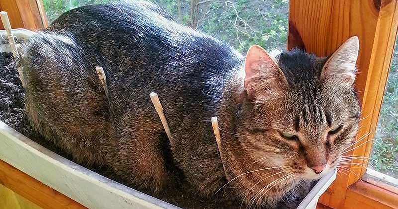 Коты и рассада