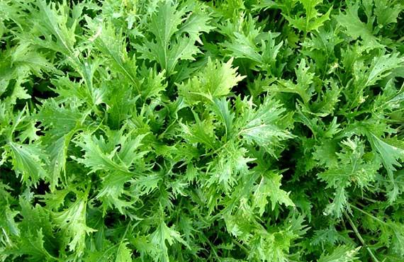 Швидкоростучі рослини
