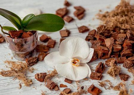 Грунт для орхидеи