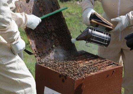 Дымарь для пчел