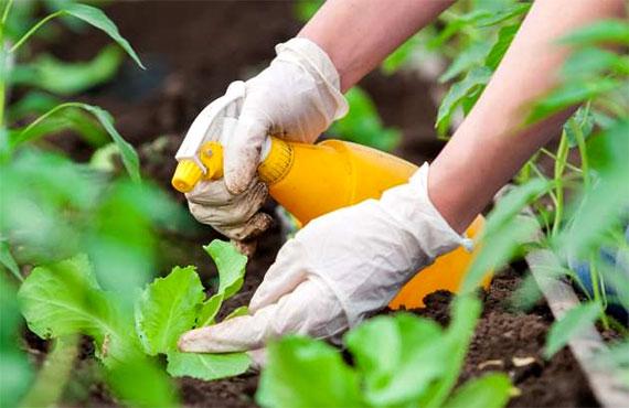 Безопасные защитные средства для растений