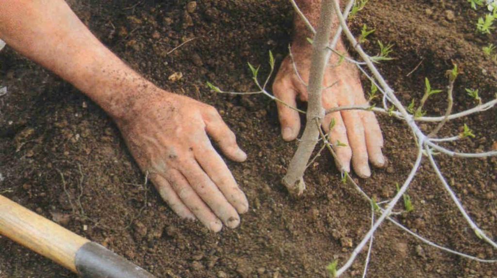 Когда сажать деревья в саду осенью 19