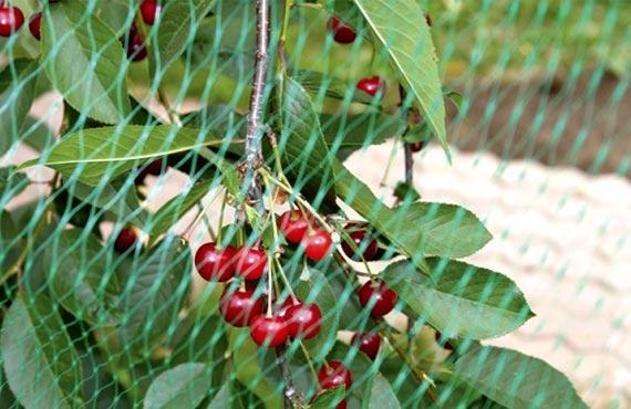 Сетка для защиты плодовых деревьев