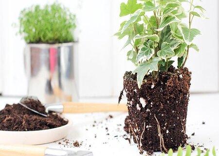 Ґрунти для кімнатних рослин