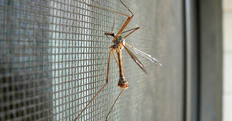 Средства от насекомых в доме