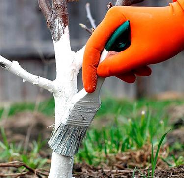 побілка садова в Україні