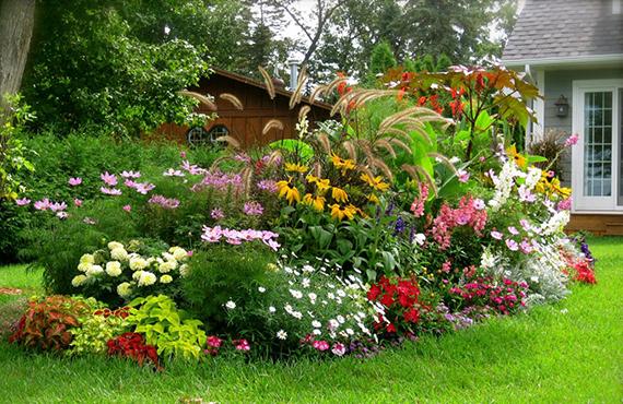 Всесезонні рослини
