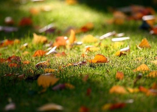 Осінні добрива для газону