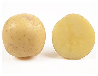 Насіннєва картопля Електра