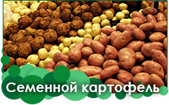 Семенной картофель предзаказ