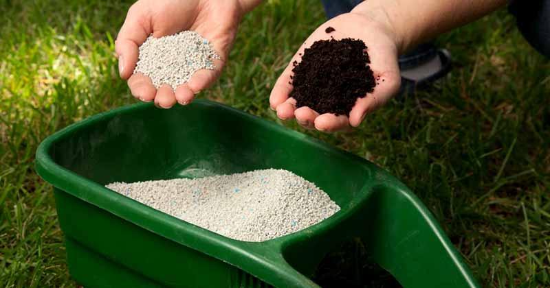 Як вилікувати газон