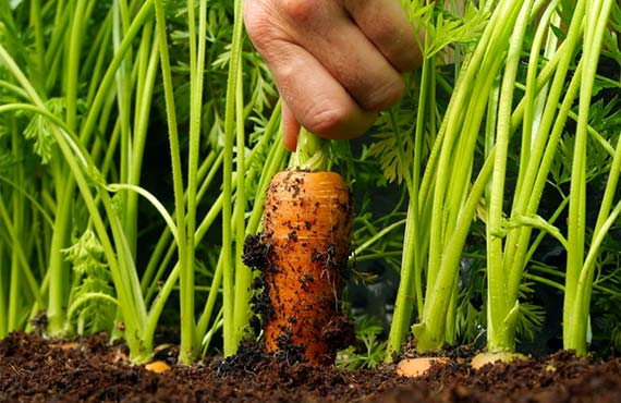 Быстрорастущие растения