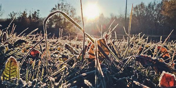 Вплив заморозків на врожай