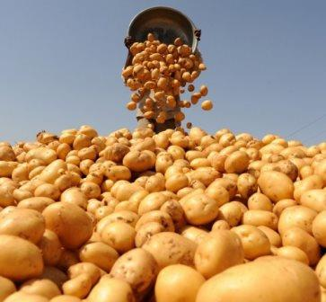 Добрива для картоплі купити
