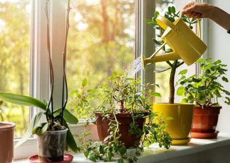 Вазони для кімнатних рослин