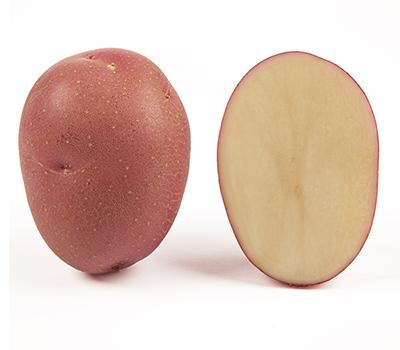 Насіннєва картопля сорту Христина