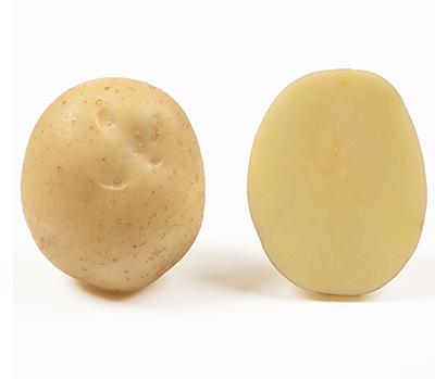 Насіннєва картопля Орла