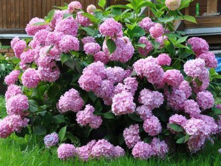 Купить цветы для дачи киев картинка живые цветы