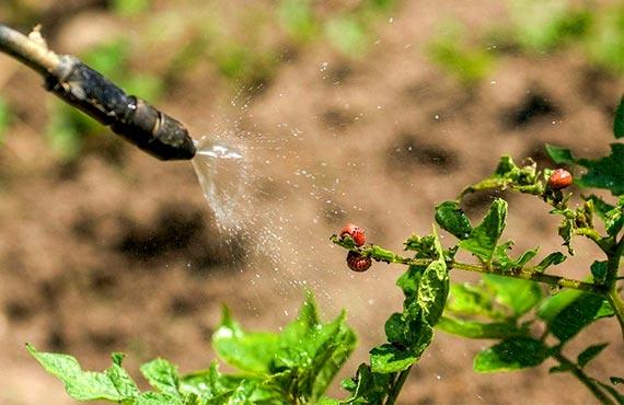 Инсектициды купить