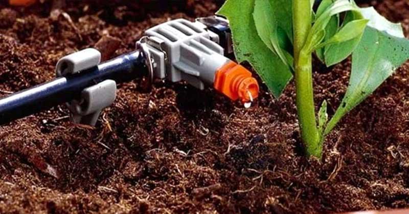 Как поливать овощи